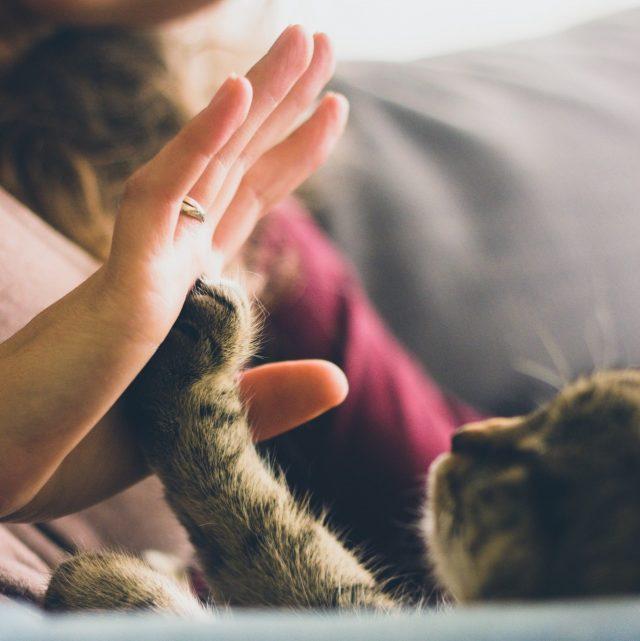 โรคซึมเศร้า, แมวบำบัดโรคซึมเศร้า, การบำบัดโรคซึมเศร้า